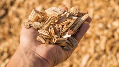 Une main qui contient plusieurs copeaux de bois